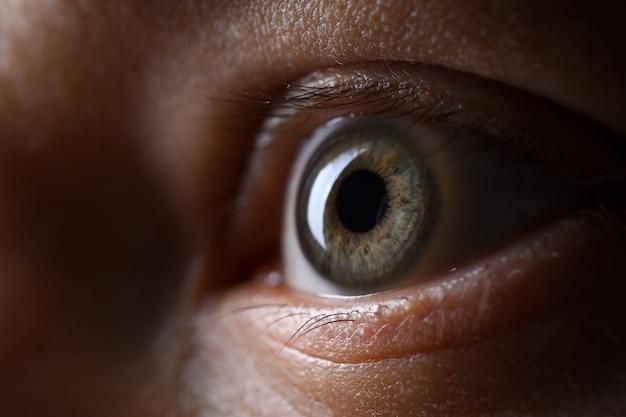 Mannetje grijsgroen gekleurd linkeroog bij weinig licht techniek Premium Foto