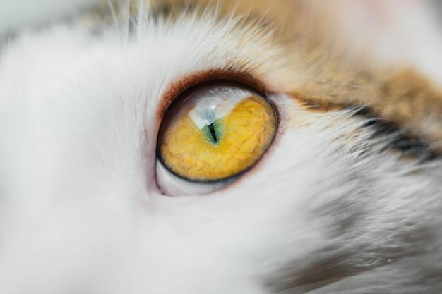 Marco cat eye close-up. kat wit Premium Foto
