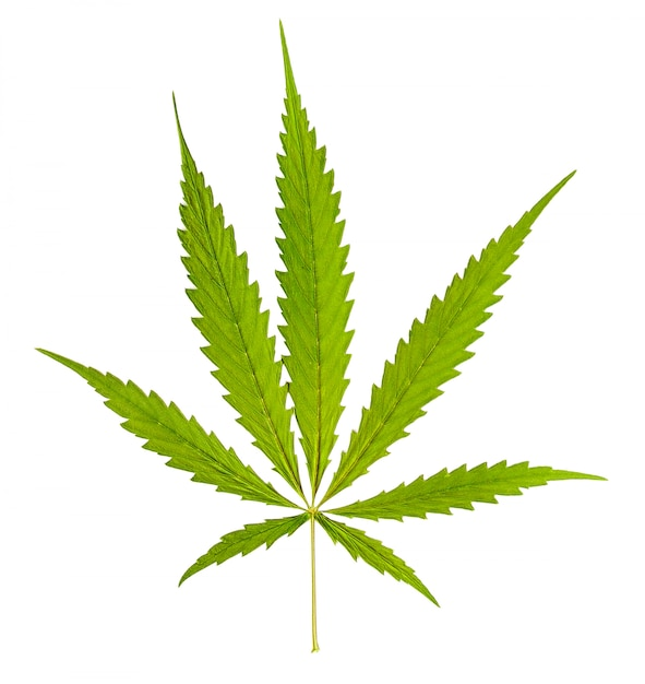 Marihuana die op witte achtergrond wordt geïsoleerd Premium Foto