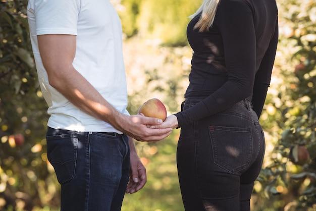 Medio sectie van de appel van de paarholding in appelboomgaard Gratis Foto
