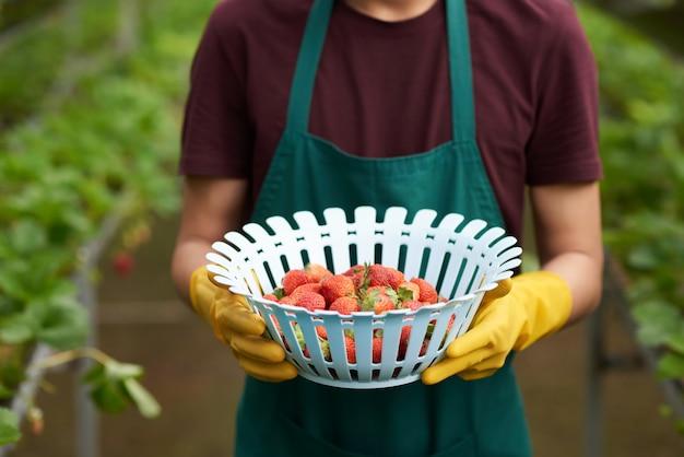 Medio sectie van onherkenbare landbouwer die een kom aardbeien houdt Gratis Foto