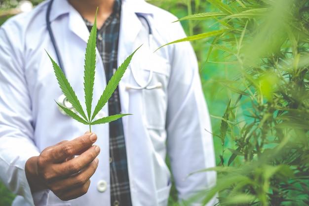 Medische marihuana, alternatief kruidengeneeskundeconcept Gratis Foto