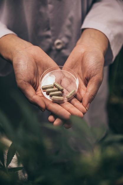 Medische marihuanabloemknoppen. recreatieve marihuanasoort. cannabissoort. wietknop in de glazen pot. apotheek menu. hennepknoppen. Premium Foto
