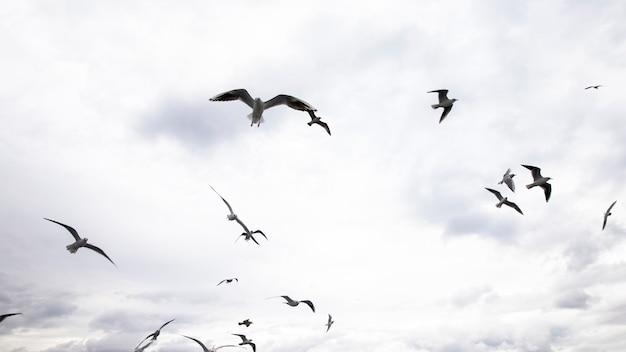 Meerdere zeemeeuwen vliegen met grijze en bewolkte hemel Premium Foto
