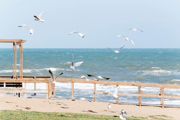 Meeuwen op dijk dichtbij het golven van overzees Gratis Foto
