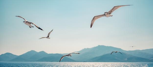 Meeuwen stijgen in de open lucht Premium Foto