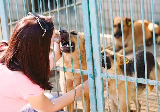 Meisjesvrijwilliger in de kinderkamer voor honden. opvang voor zwerfhonden. Premium Foto