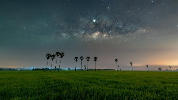 Melkweg galaxy met rij palmbomen in rijstvelden Premium Foto