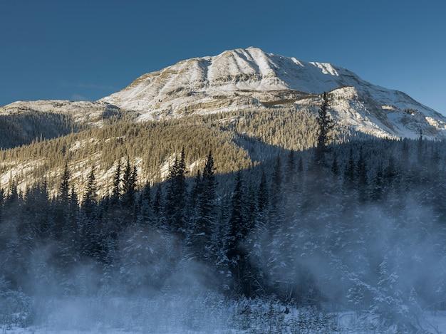 Mening van bomen met snowcapped berg op de achtergrond, de weg van alaska, noordelijke regionale bergen Premium Foto