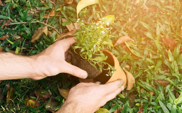 Mens die zaailing in pot plant Gratis Foto