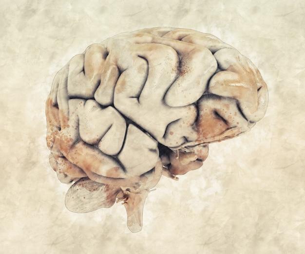 Menselijke brein Gratis Foto