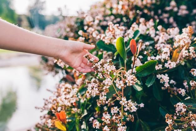 Menselijke hand aanraken van bloemen in park Gratis Foto