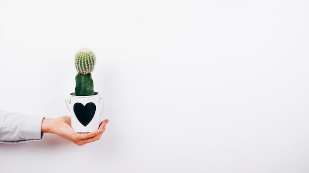 Menselijke hand die succulente installatie met heartshape op pot over witte achtergrond houdt Gratis Foto