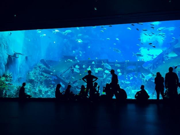 Mensen observeren vissen in het aquarium Premium Foto
