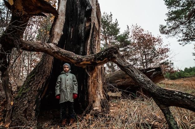 Mensenkind die zich binnen een boomboomstam bevinden Premium Foto