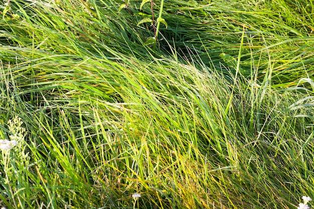 Met dauw bedekt groen en vergeling gras in de vroege herfst, close-up in het bos Premium Foto