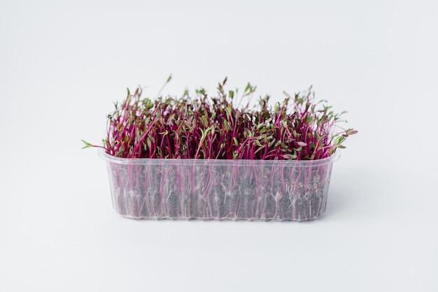 Micro-groene biet ontspruit close-up op een wit oppervlak in een pot met aarde. gezonde voeding en levensstijl. Premium Foto