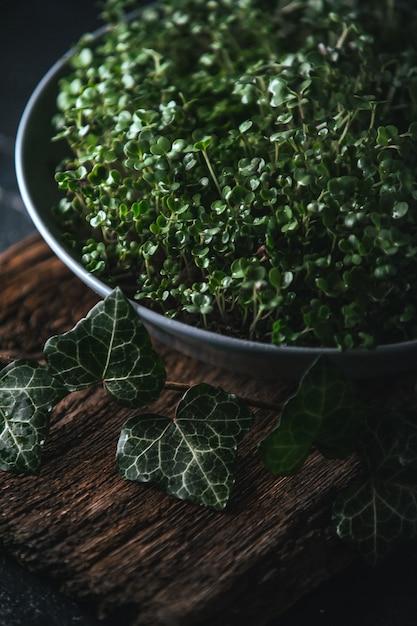 Microgreen in een grijze schotel op een houten plattelander Premium Foto