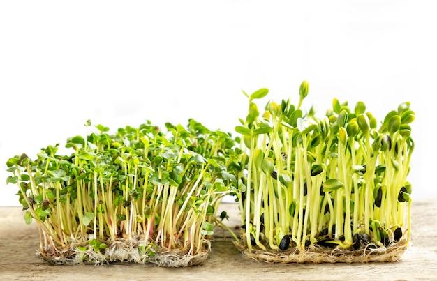 Microgreens. ontkiemde zonnebloempitten en radijsspruiten Gratis Foto