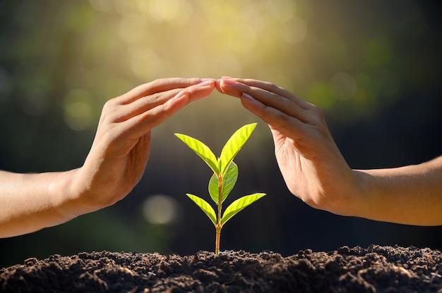 Milieu dag van de aarde in de handen van bomen die zaailingen kweken. Premium Foto
