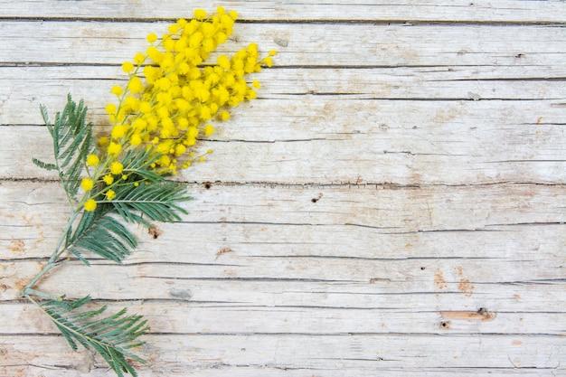 Mimosabloemen op houten achtergrond. 8 maart, vrouwendag symbool en lente. Premium Foto