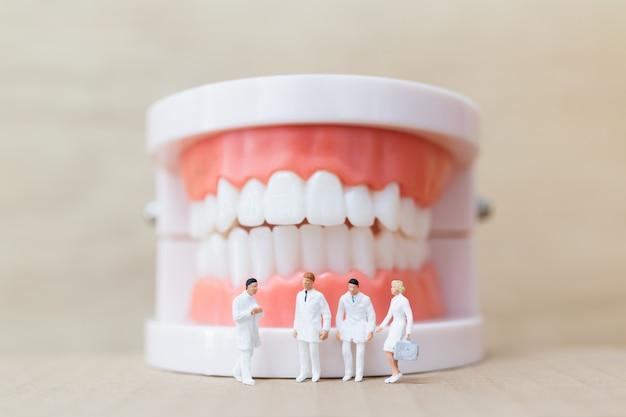Miniatuurmensen: tandarts en verpleegster observeren en bespreken menselijke tanden met tandvlees en glazuur Premium Foto