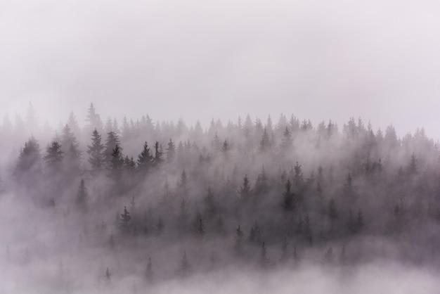 Mist boven dennenbossen. dicht pijnboombos in ochtendmist. Premium Foto