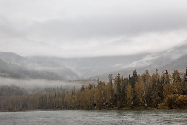 Mist in de bergen. bewolkt bos. rivier. Premium Foto