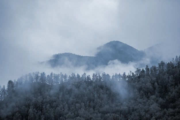 Mist in de bergen. bewolkt. woud. Premium Foto