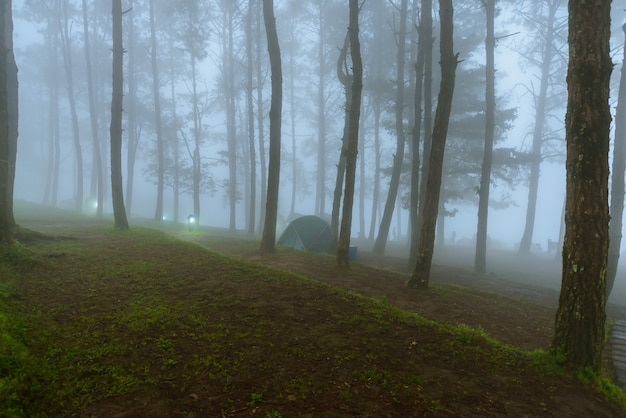 Mist in morning mon sone view point, doi pha hom pok nationaal park, thailand Premium Foto