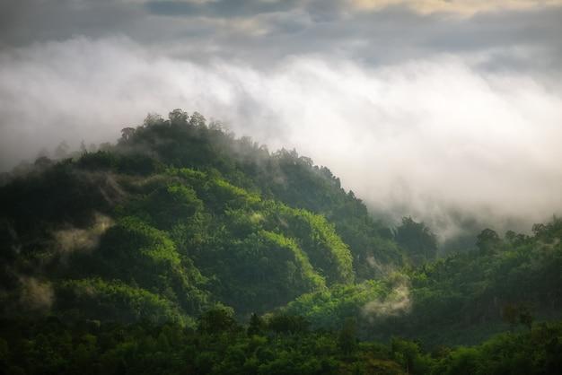 Mist op het bos en de bergen Premium Foto