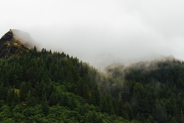 Mistig landschap van een bos met rook die uit de bomen komt Gratis Foto