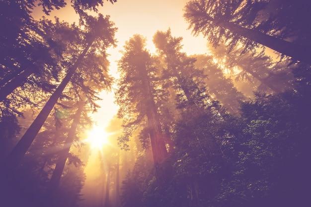 Mistige bosweg Gratis Foto