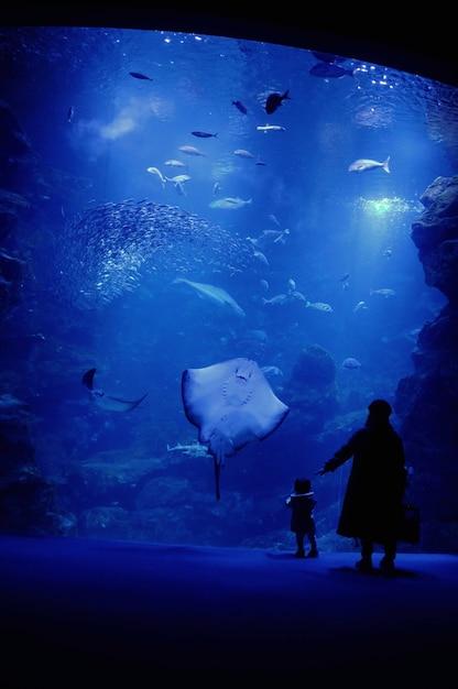Moeder en zoon in het aquarium Gratis Foto