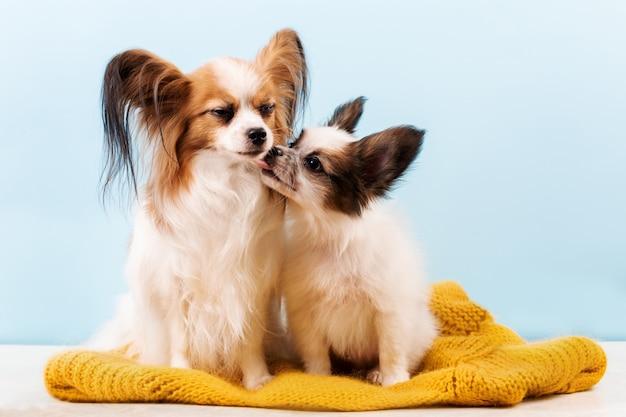 Moeder hond kussen puppy Premium Foto