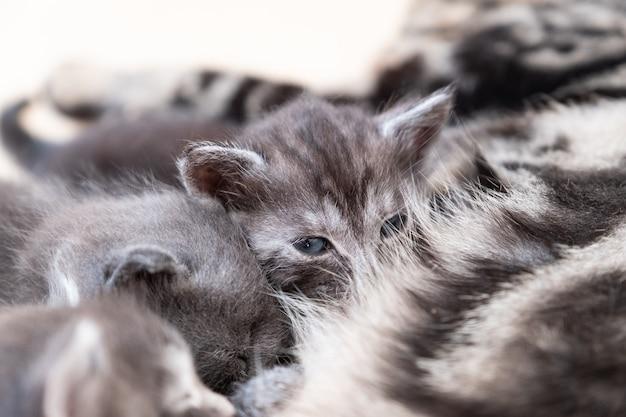 Moederkat die haar kittens verzorgt Premium Foto