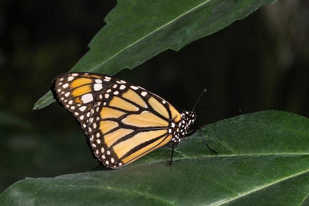 Monarchvlinder in tropische habitat Gratis Foto