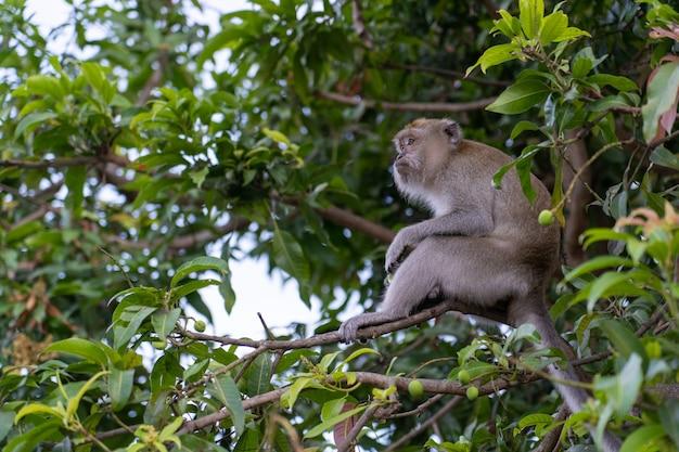 Monket vindt iets te eten aan de boom Premium Foto