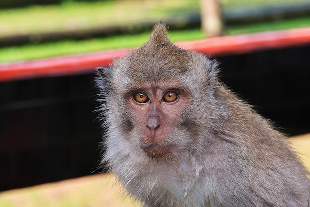 Monkey forest Premium Foto