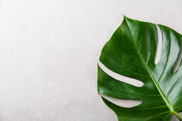 Monstera groen blad op grijs Gratis Foto