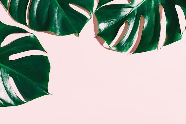 Monstera groene bladeren op roze Gratis Foto