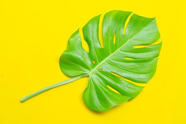 Monstera plant bladeren. bovenaanzicht Premium Foto