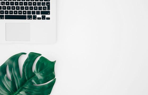 Monsterablad of zwitsers kaasblad dichtbij laptop tegen witte achtergrond Gratis Foto