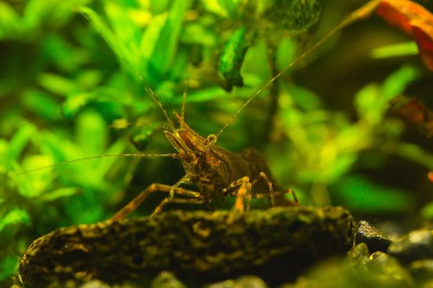 Mooi aquarium met een overvloed aan planten en bewoners van de onderwaterwereld. Premium Foto