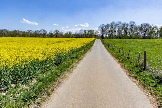 Mooi bastgebied met groene wilde bloemen en een blauwe hemel Gratis Foto