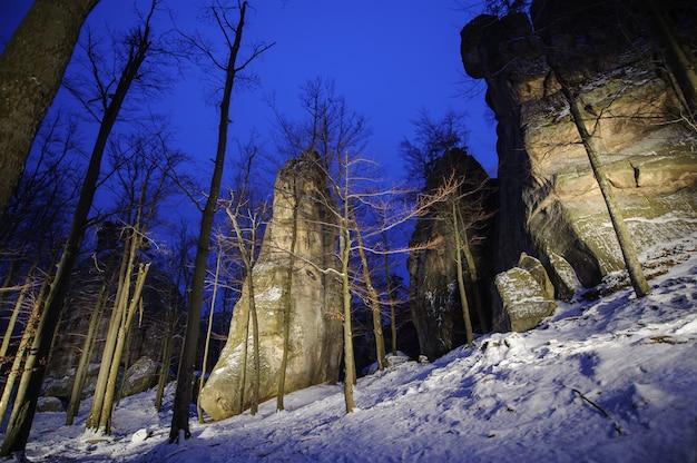 Mooi bergbos en grote licht geschilderde rotsachtige keien Premium Foto