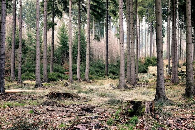 Mooi en gedetailleerd inzicht in de diepten van het bos Gratis Foto
