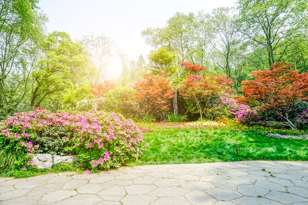 Mooi groen park Gratis Foto