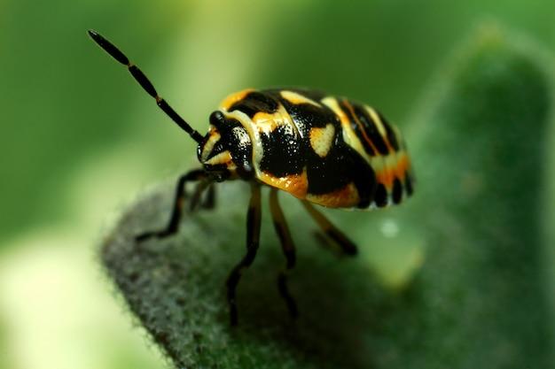 Mooi insect op een sappig groen blad Premium Foto