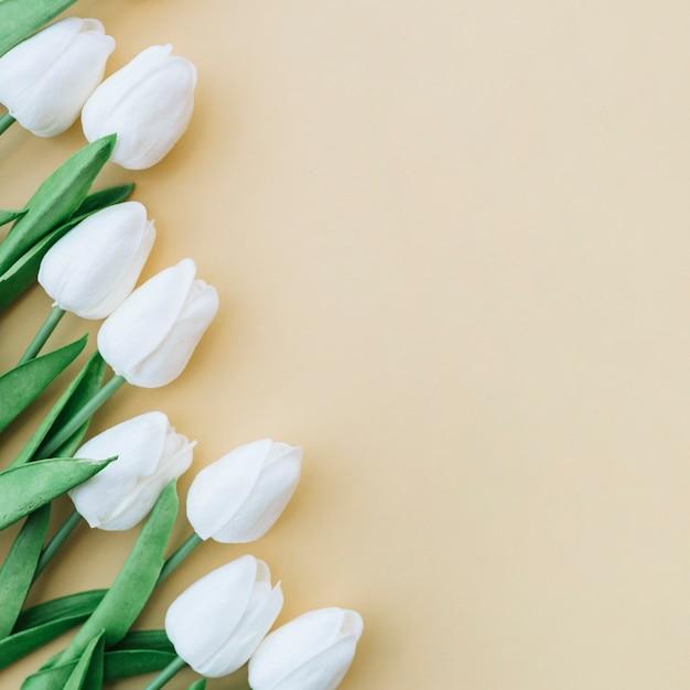 Mooi kader met witte tulpen op gele achtergrond Gratis Foto